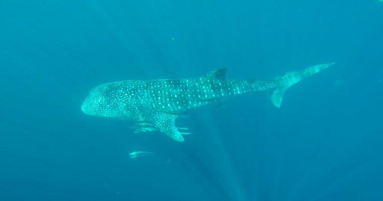 Coup de cœur du Western Australia : Ningaloo Reef
